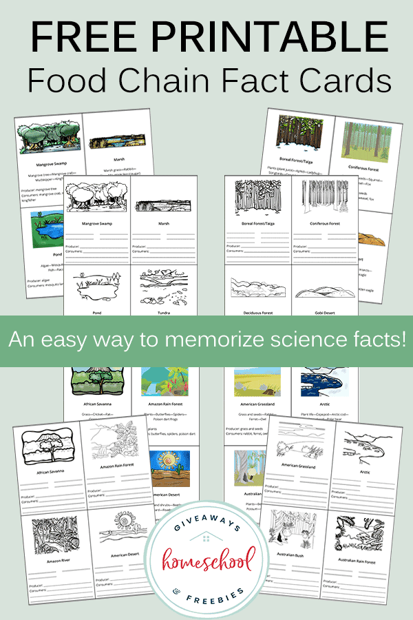 Food Chain Fact Cards