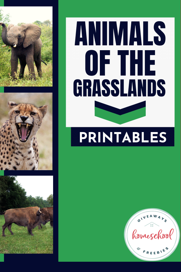 Animals of the Grasslands Printables. #grasslandanimals #grasslandsbiome #grasslandshabitat
