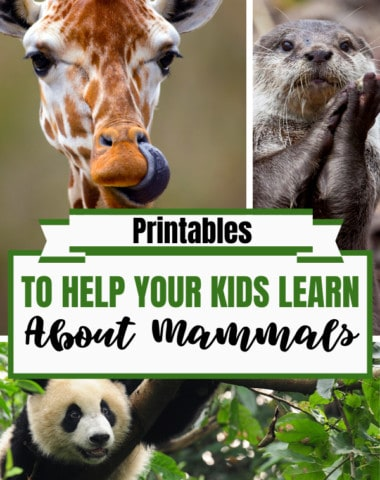 Printables to Help Your Kids Learn About Mammals. #mammelprintables #mammalresources