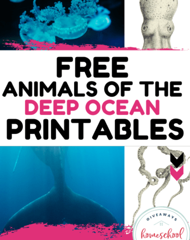 Free Animals of the Deep Ocean Printables text with photos of ocean animals.