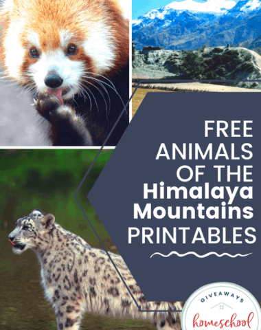 FREE Animals of the Himalaya Mountains Printables with photos of animals in the himalayan mountains.