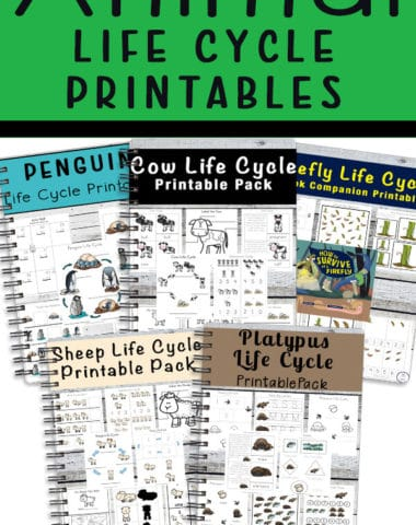 Animal Life Cycle Printables
