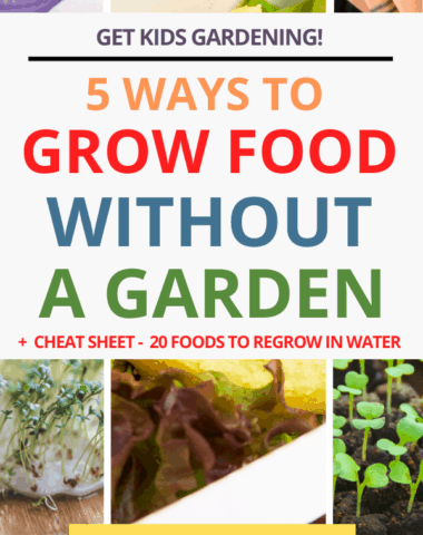 5 ways to grow food without a garden text overlay on collage of seeds and vegetables to grow indoors.