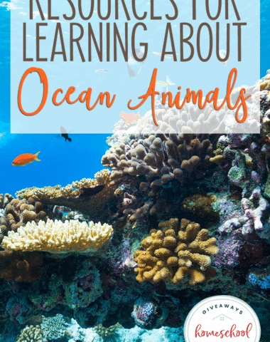 "underwater coral reef with overlay ""Resources for Learning About Ocean Animals"""