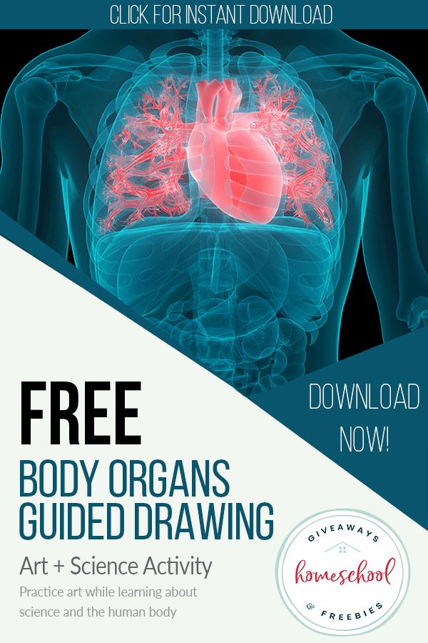 Body Organs Educational Sheets