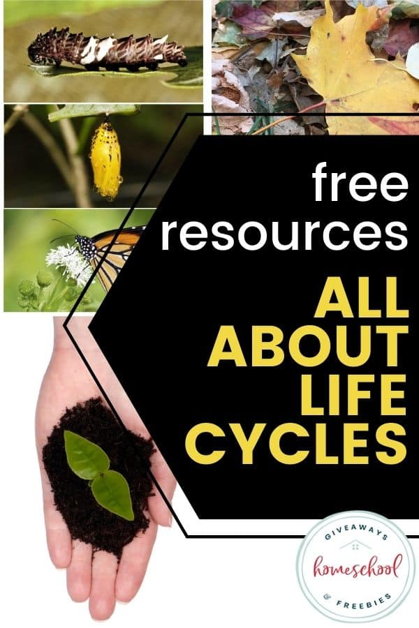 free resources about life cycles