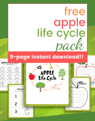 Free apple life cycle pack text overlay on images of apple worksheets for kids