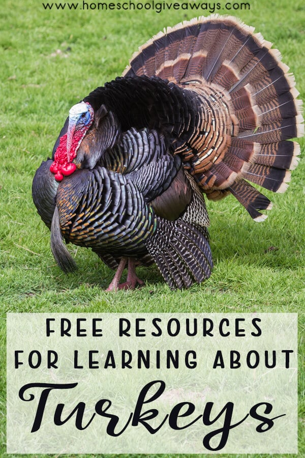 FREE Resources for Learning about Turkeys