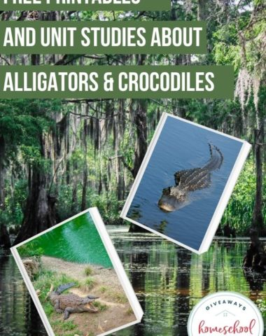 Free Printables and Unit Studies About Alligators & Crocodiles. #crocodileunitstudy #alligatorunitstudy #crocodileprintables #alligatorprintables #alligatorsandcrocodiles