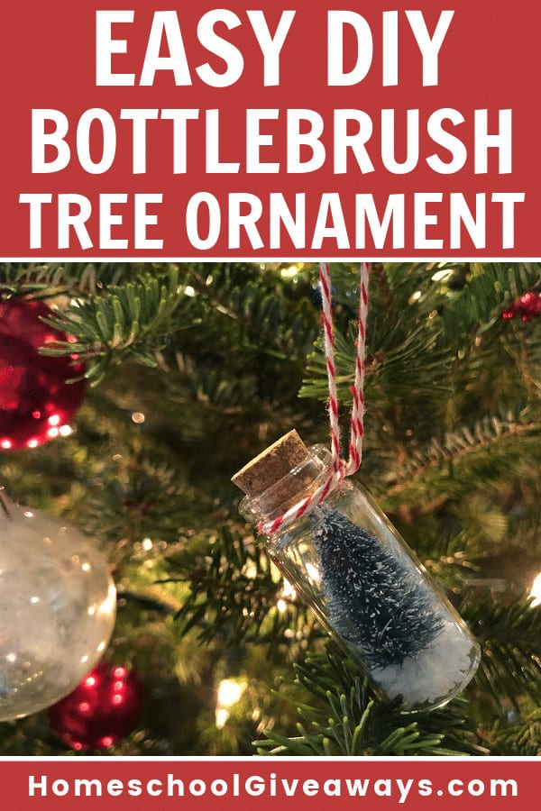 bottlebrush tree