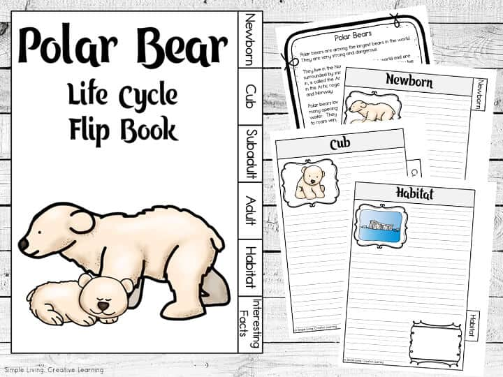 Free Resources for Learning about Polar Bears
