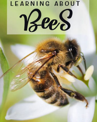 Free Resources for Learning about Bees