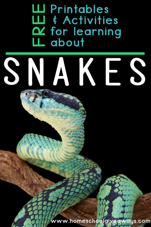 FREE Printables for Learning about Snakes